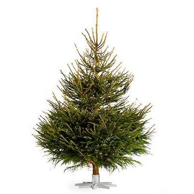 Juletræ i rødgran fra Mosegaarden